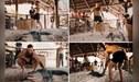 UFC: Conor McGregor realiza sparring con un gigantesco caimán