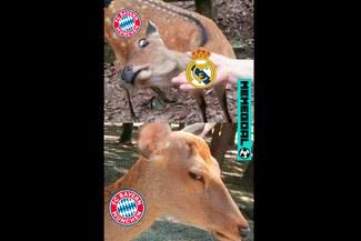 Champions League: mira los mejores memes tras el sorteo de las semifinales [FOTOS]