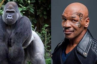 ¡No es broma! Mike Tyson y la ocasión en la que casi pelea con un gorila