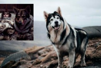 Game of Thrones: perro que dio vida al lobo de Bran Stark falleció