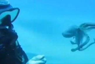 Buzo se encuentra con pulpo en el fondo del mar y se ponen a jugar [VIDEO]