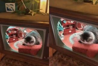 Viral: dueña modifica un televisor para construir una casa a su gato - VIDEO
