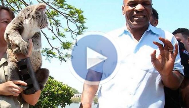 Mike Tyson se asustó con un koala en Australia [VIDEO]
