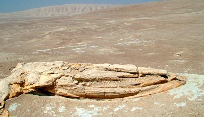 Ministerio de Cultura implementó señalización para evitar daños paleontológicos