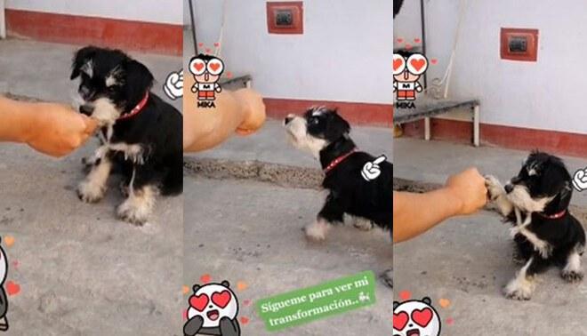 TikTok: dueño premia a su perrita por obedecer sus indicaciones [VIDEO]