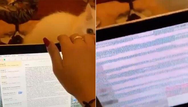 Gato malogra laptop de su dueña y es viral en las redes sociales