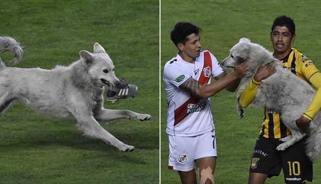 Un perro invadió la cancha de un estadio boliviano para jugar con una zapatilla de un futbolista. Foto: Twitter.