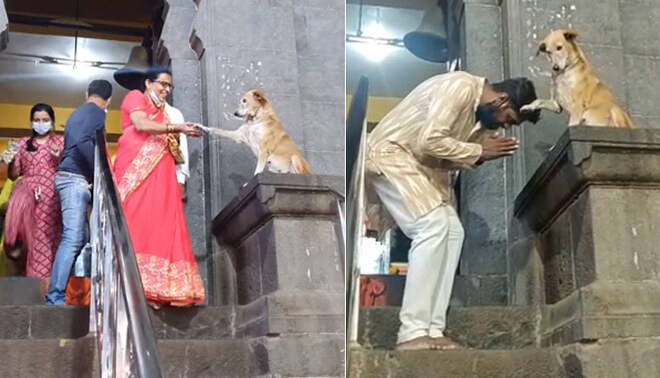 Perrito que da bendición a devotos fuera de la iglesia es viral en Facebook - FOTO: Arun Limadia FB