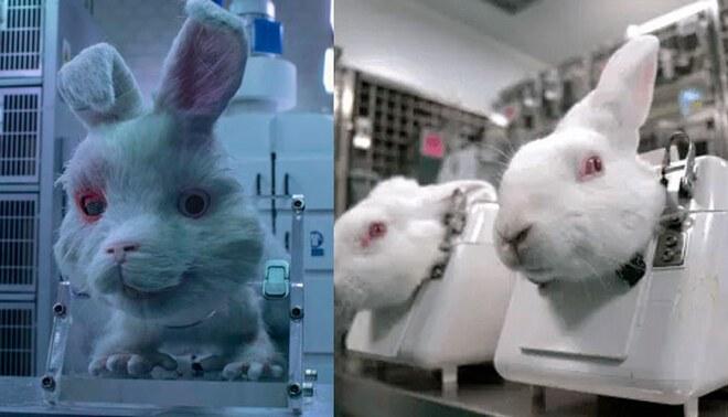 Conejo Ralph - Abuso de los animales en laboratorios de cosméticas